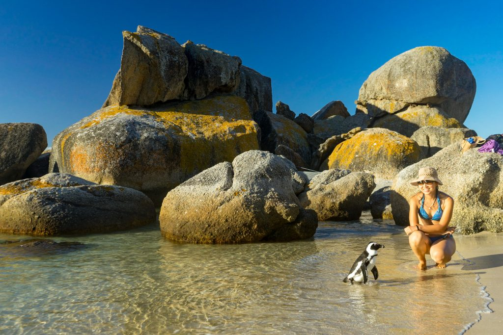 penguins at Boulders Beach, Cape Point National Park House sitting in South Africa