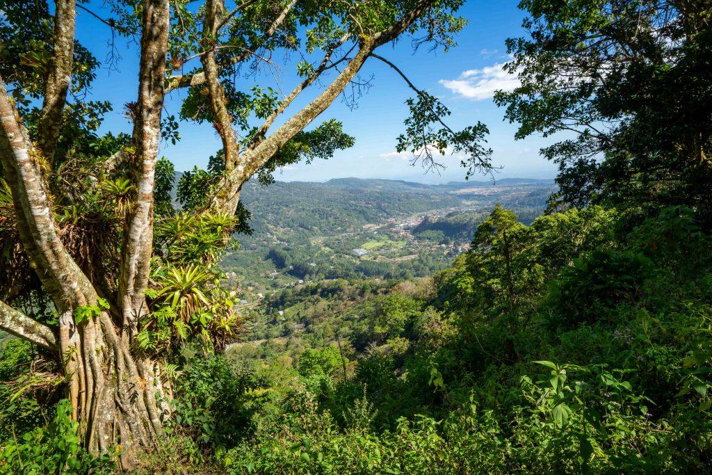 hiking, mountain, Boquete, Panama, tree