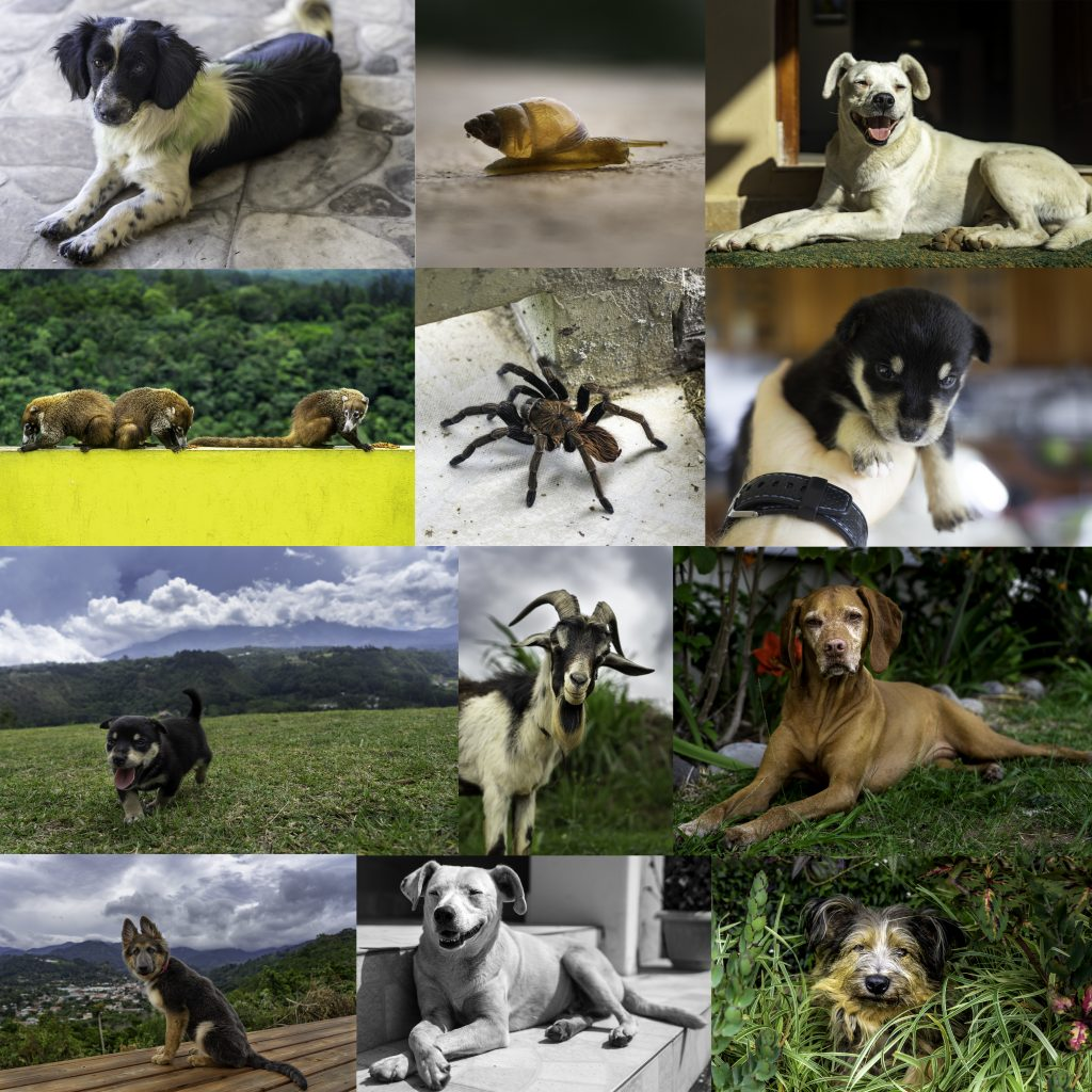 All of my new found animal friends here in Boquete, Panama Quarantine in Panama for Covid-19