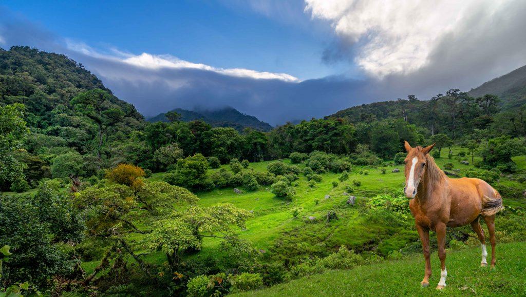 horse, sunrise, meadow, Boquete, Panama