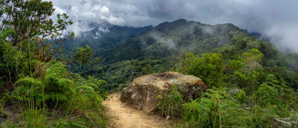 jungle, montains, hiking, Boquete, Panama, La Piedra De Lino