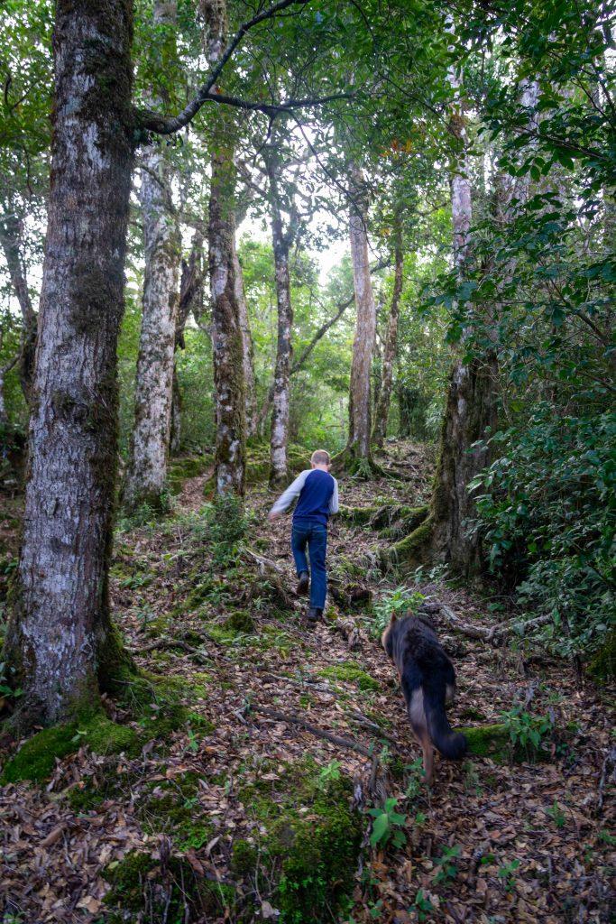 Artillery Hill, Cerro La Artilleria, Boquete, Panama, hiking, trail