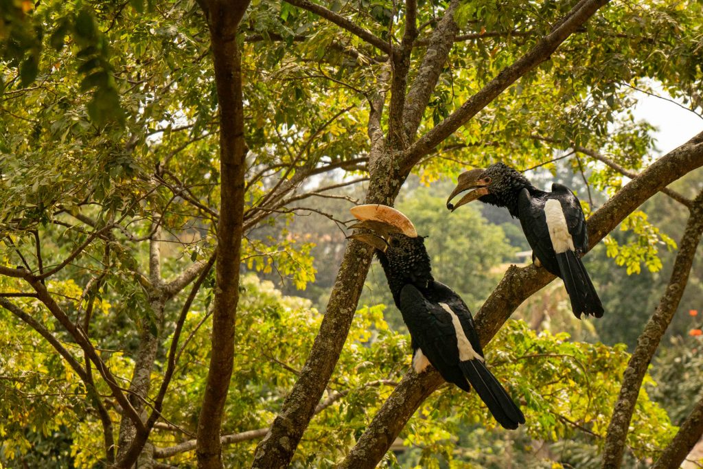 toucan, house sitting, Nairobi, Kenya, Africa