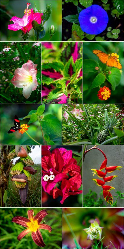 Flora and fauna of Boquete, Panama during Quarantine in Panama for Covid-19