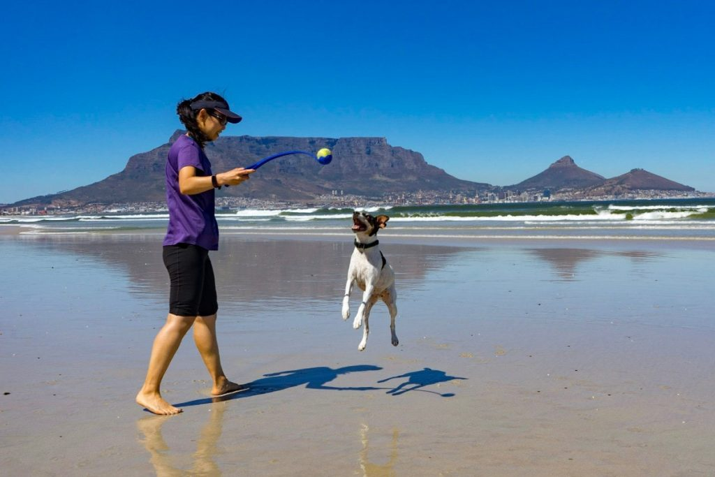 dog sitting, house sitting, Cape Town South Africa