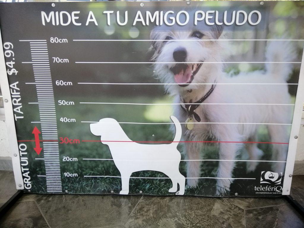 dogs, TeliferiQo