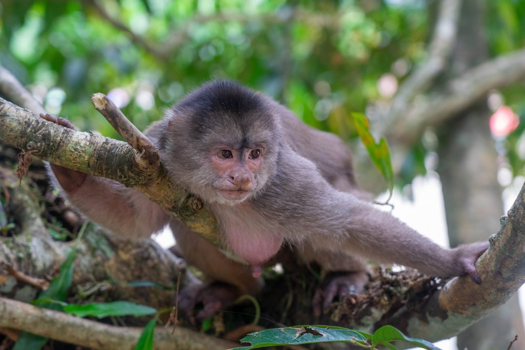 Tena, Ecuador, monkey, jungle, Amazon