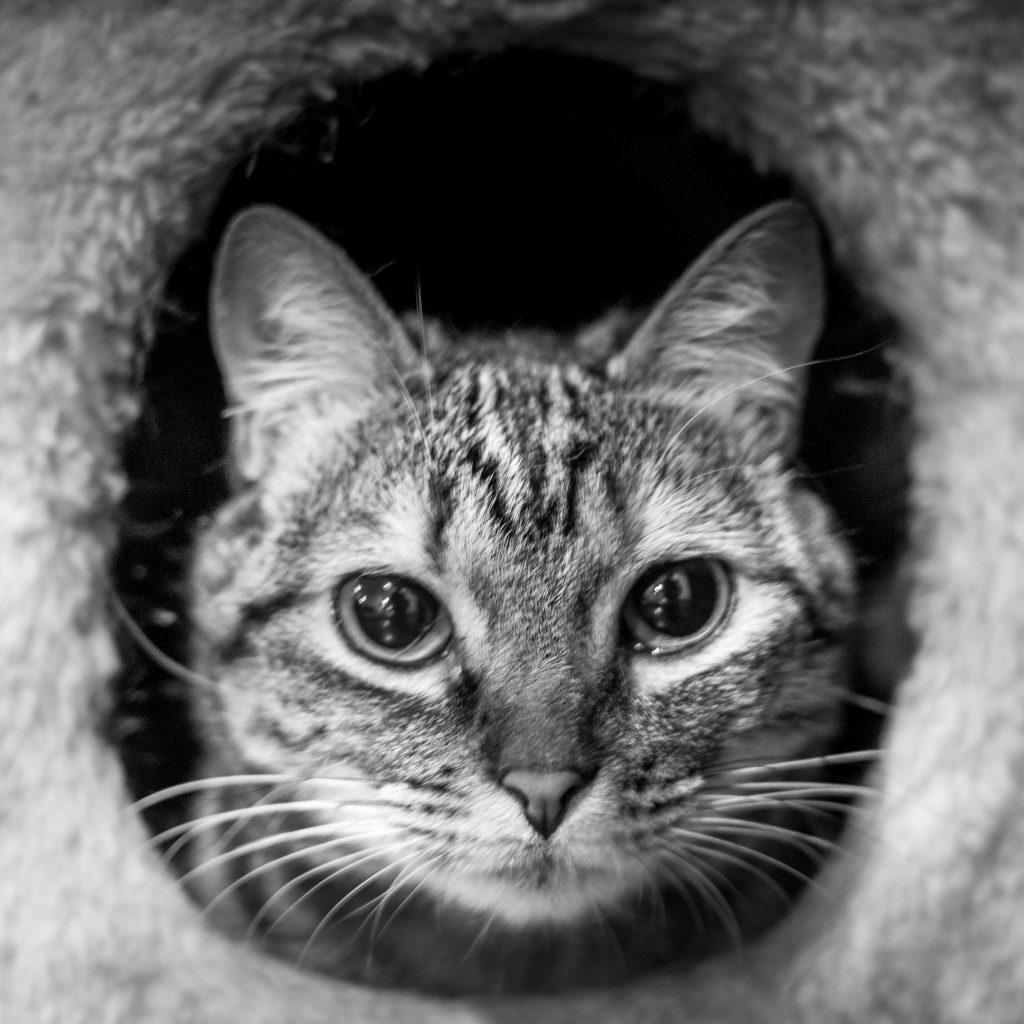 cat, gato, Cuenca, Ecuador, house sitting, pet sitting, trustedhousesitters