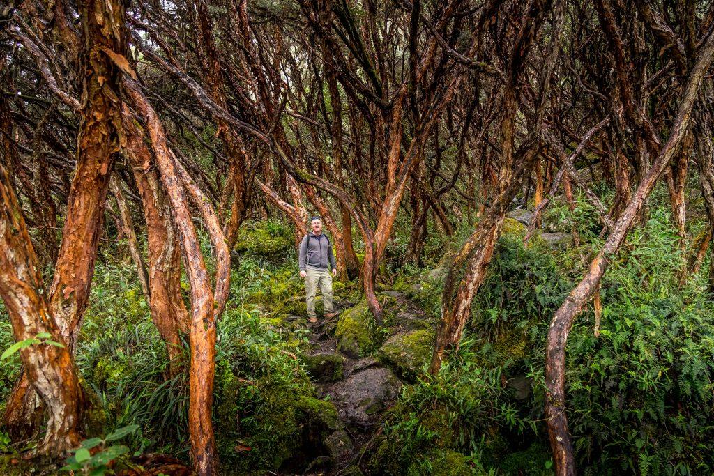 Cajas National Park, Cuenca, Ecuador, hiking, bosque