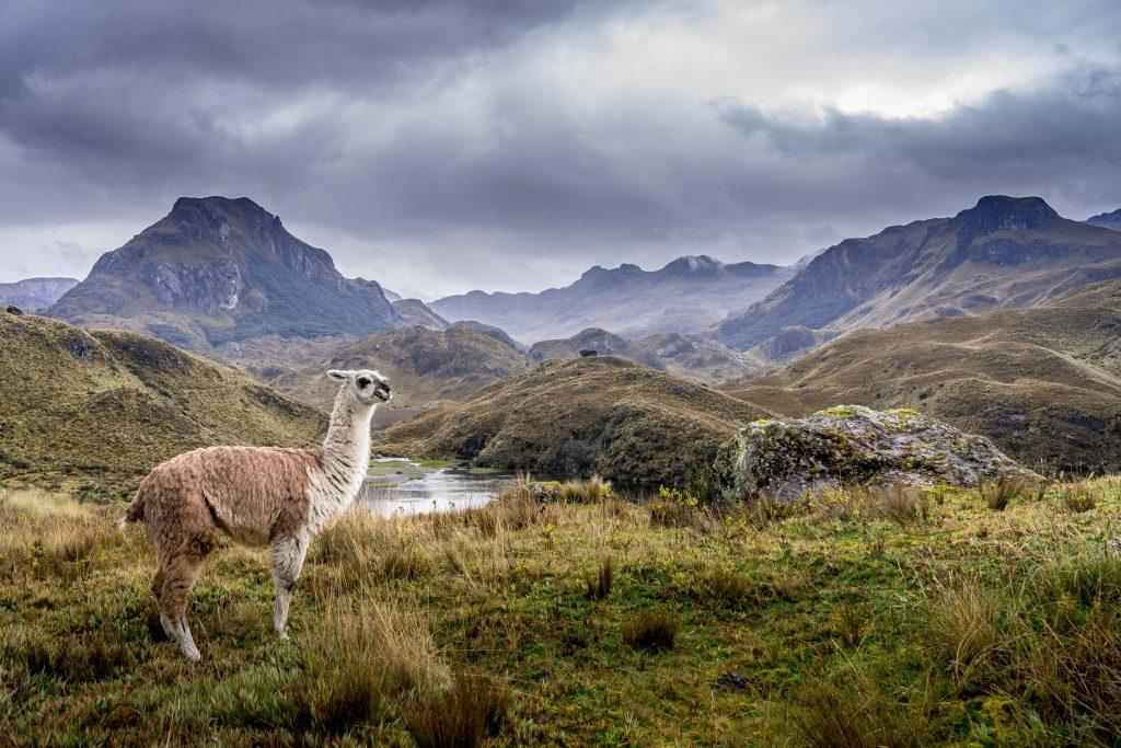Cajas National Park, Parque Nacional  Cajas, hiking, Cuenca, Ecuador, llamas
